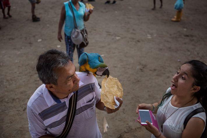Una pareja alimenta a un guacamayo con un aperitivo azucarado. Los habitantes de Puerto Alegría venden ...