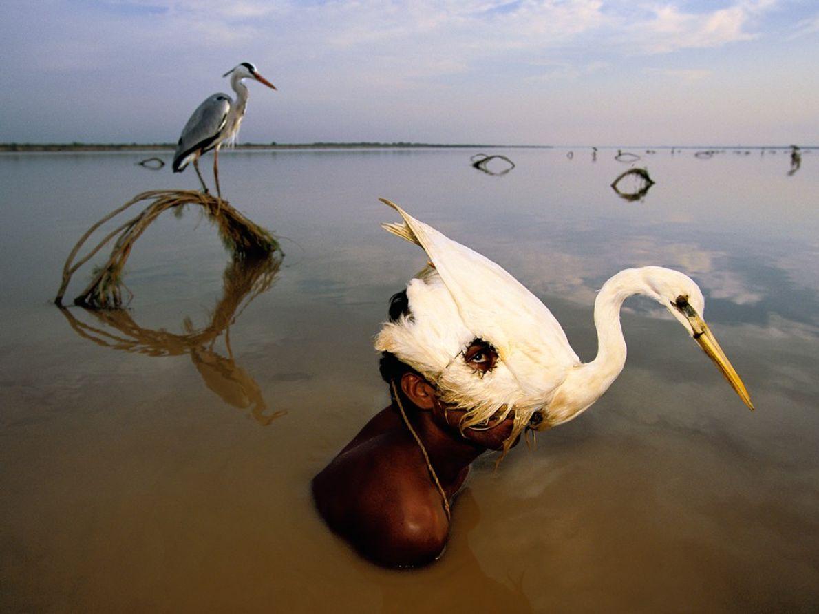 Espiando desde un señuelo, un cazador levanta su cabeza sobre el agua.