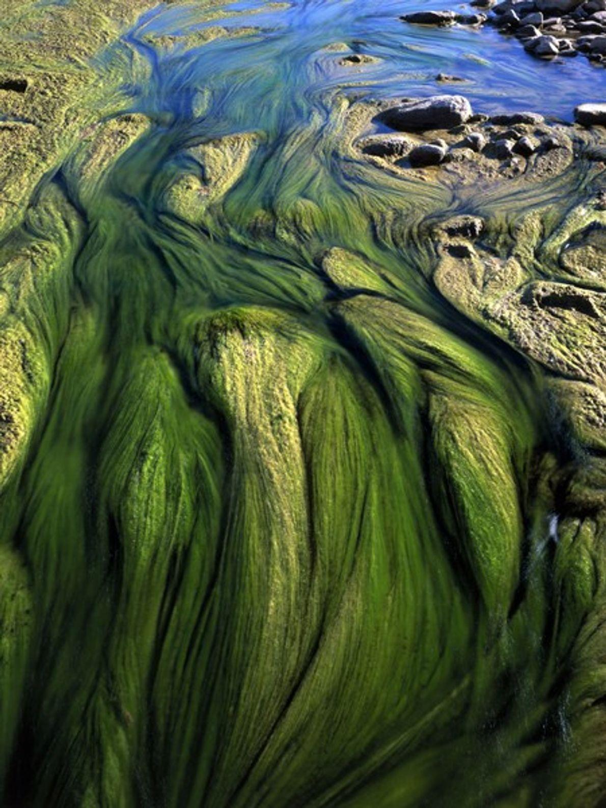 Las algas le dan color a la confluencia del Rio Grande y el Arroyo San Carlos.