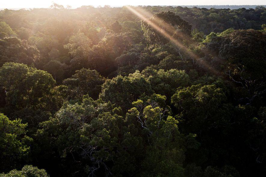 Una torre de acero en el Museo da Amazonia ofrece a los visitantes una impresionante vista ...