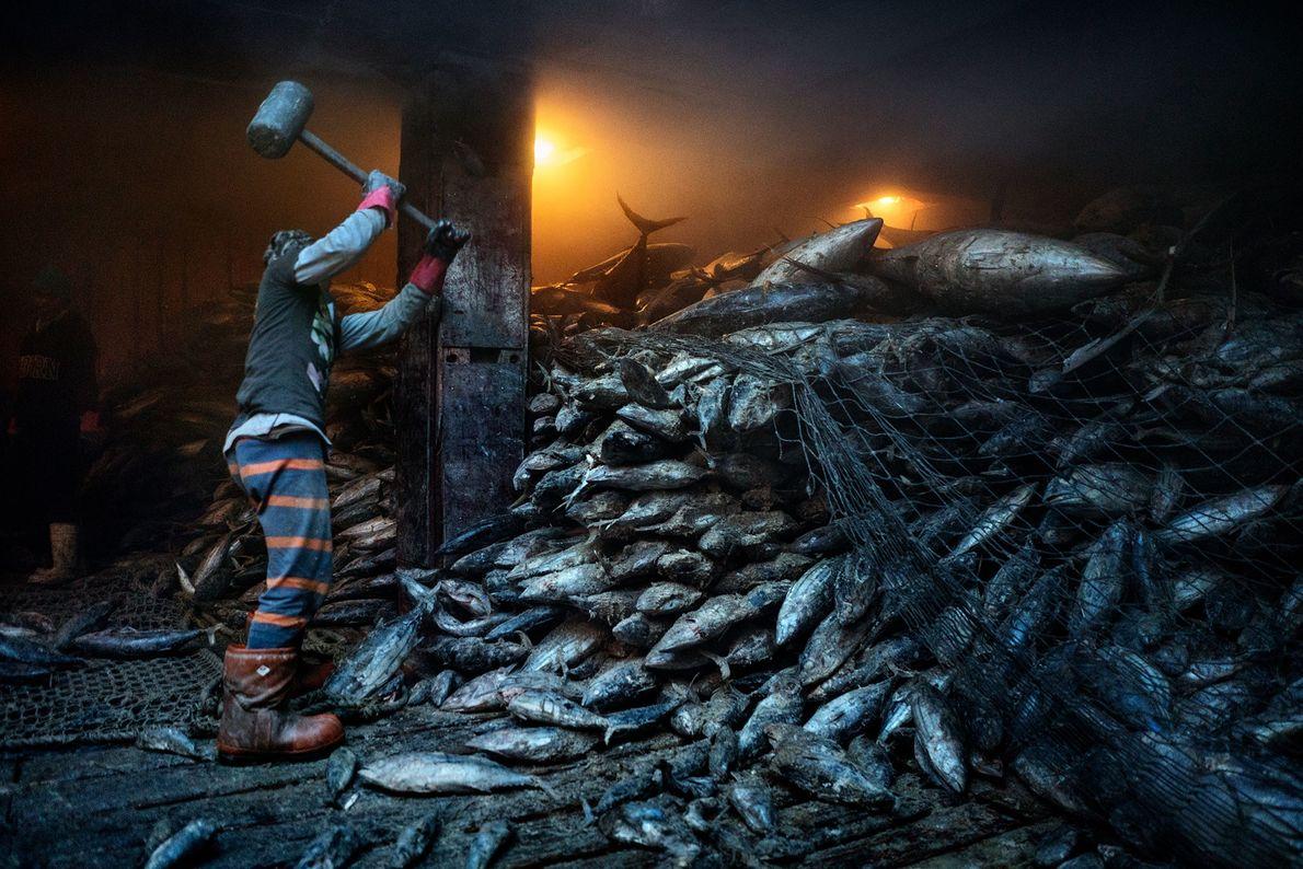 Un trabajador utiliza un mazo para sacar el atún congelado de un carguero chino atracado en ...