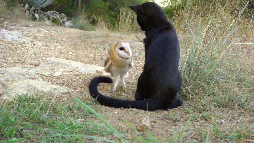 Amistades Insólitas: El Búho y el Gatito
