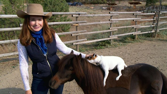 Amistades Insólitas: El show del perro y el poni