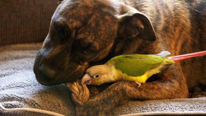 Amistades Insólitas: Un Ave Valiente