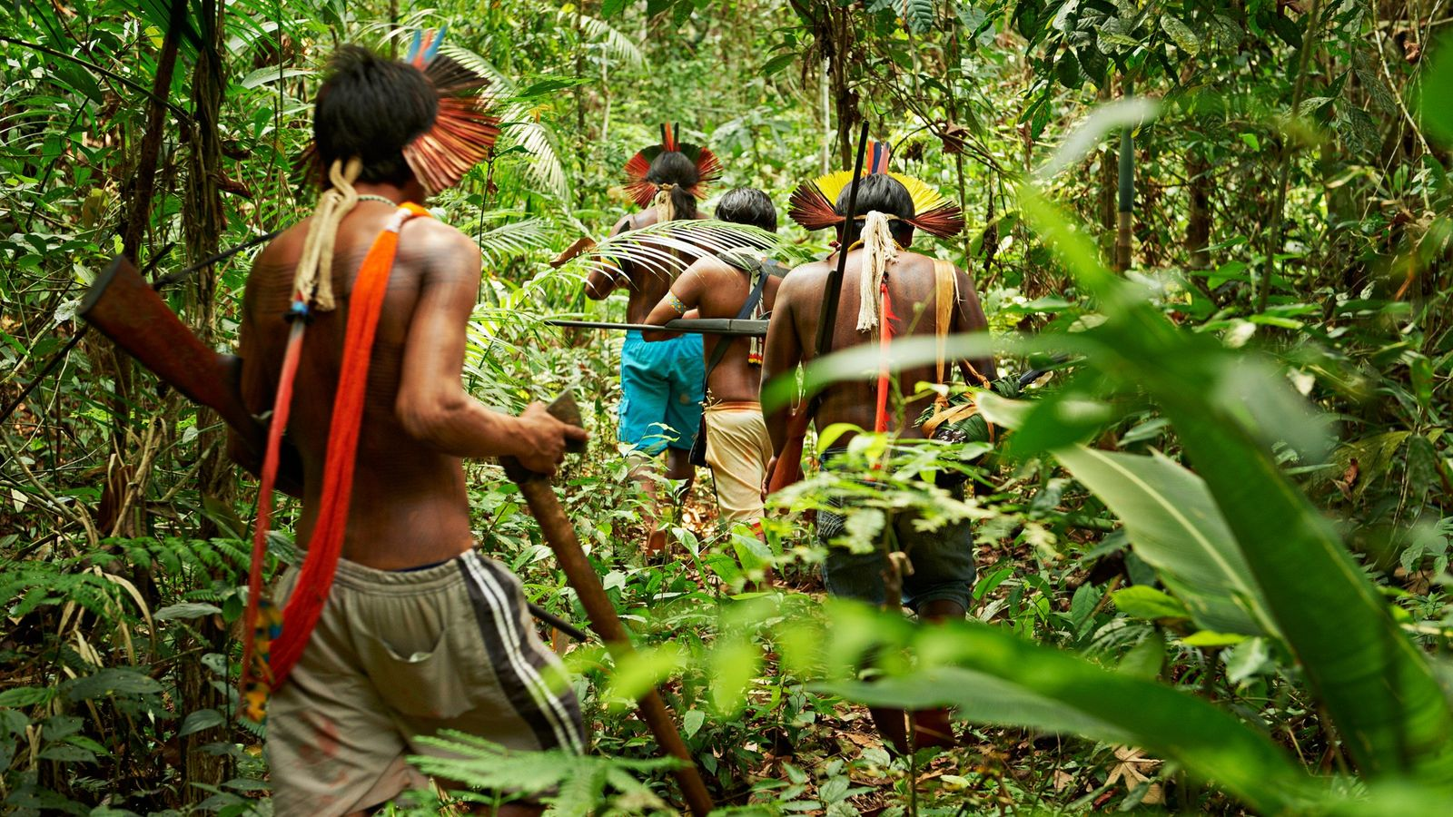 amazon kayapo indigenous deforestation
