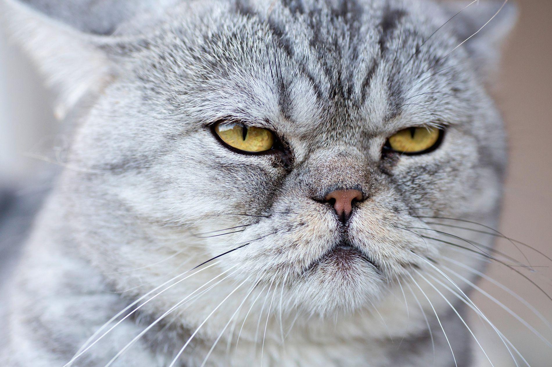 gatos_comportamiento