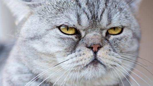 ¿Qué piensan los gatos de nosotros? Podrías sorprenderte...