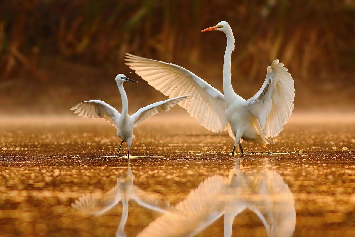 """""""La naturaleza no es un lujo sino una necesidad del espíritu humano"""". –Tahir Abbas Awan"""