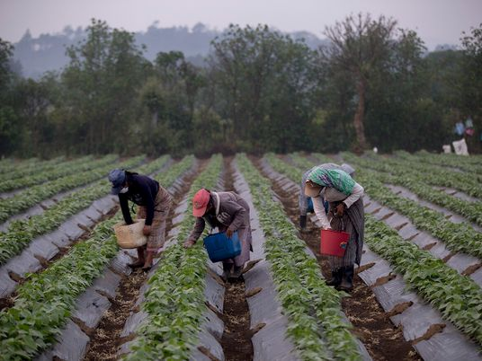 Los guardianes de las semillas nativas en Guatemala