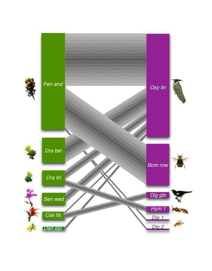Red de interacciones de polinización entre plantas y animales en la zona de retroceso del glaciar. ...