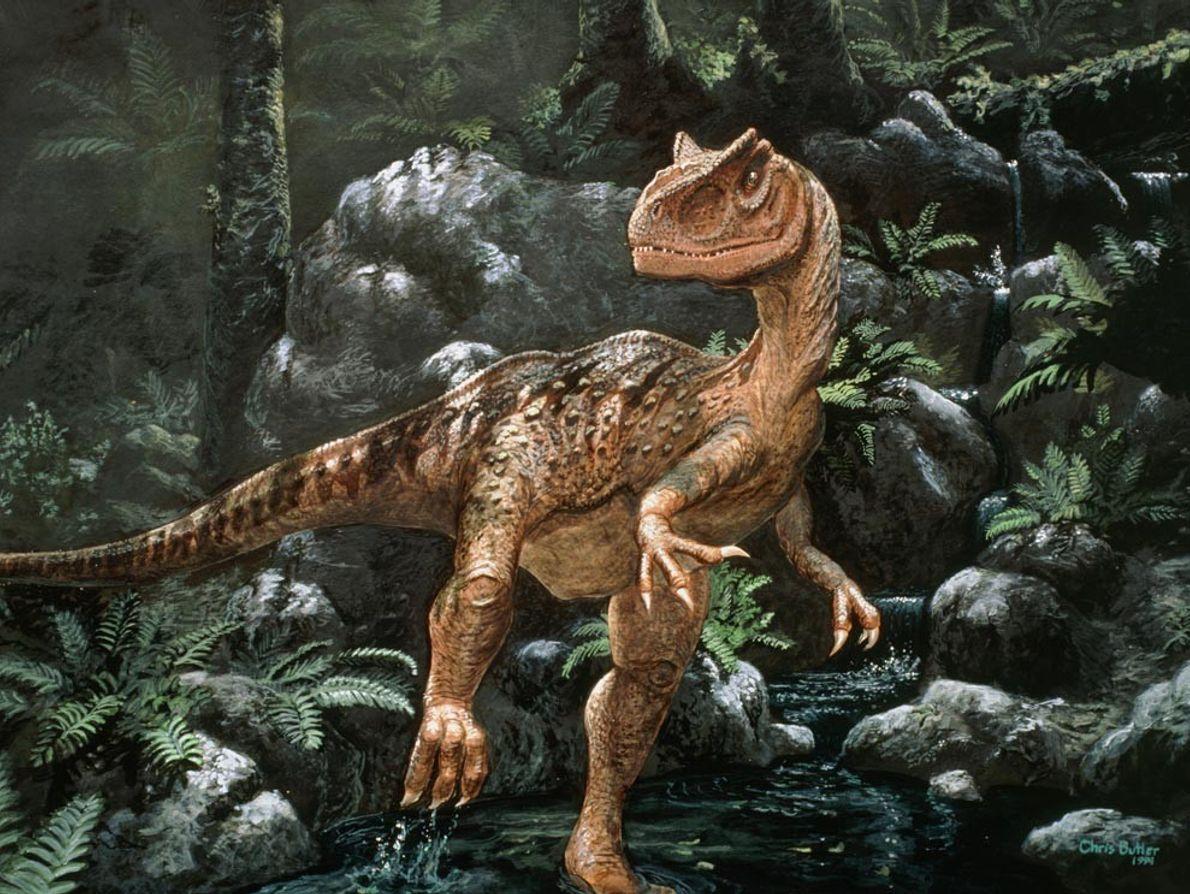 Un Alosaurio camina por un bosque de la era Mesozoica en esta reproducción artística. El Alosaurio ...