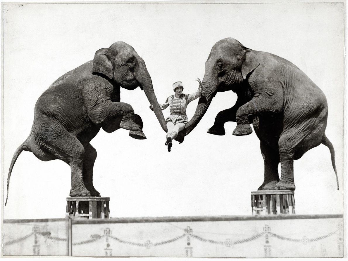 Lo que alguna vez fue un espectáculo circense popular, el uso de elefantes en la industria ...