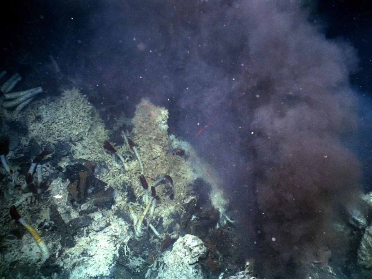 Una nube de fluidos hidrotermales fluye de una fumadera, a lo largo de la dorsal mediooceánica, ...