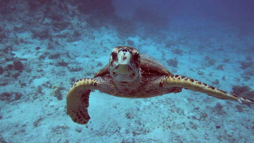 Clima 101: ¿Cómo afecta el cambio climático al océano?