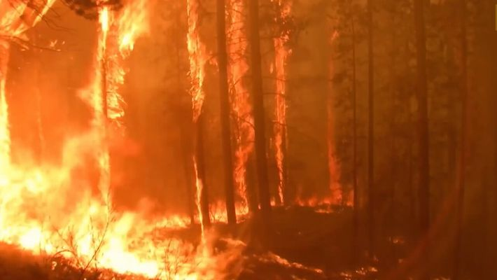 Incendios forestales: Causas y consecuencias y el triángulo del fuego