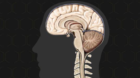 El cerebro, el órgano más complejo del cuerpo humano