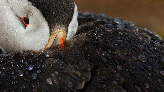 Aves de todo el mundo en 31 fotos increíbles