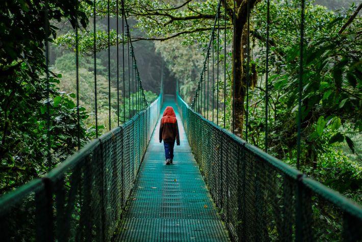 Un puente colgante en Selvatura Adventure Park en el 2012. Normalmente, el parque, que actualmente está ...