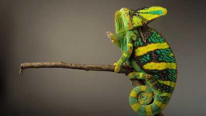 Reptiles y anfibios en riesgo