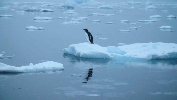¿Cómo afecta el Cambio Climático a la Antártida?