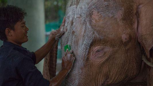 Elefantes blancos en Birmania: una mística ancestral que perdura en el tiempo