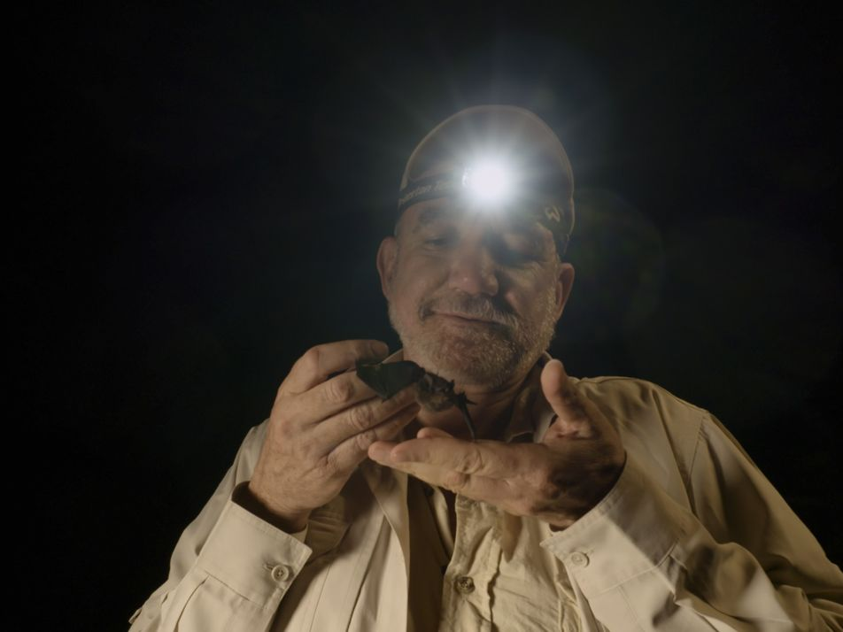 "Rodrigo Medellín sobre el COVID-19: ""Matar murciélagos no va a resolver nada"""