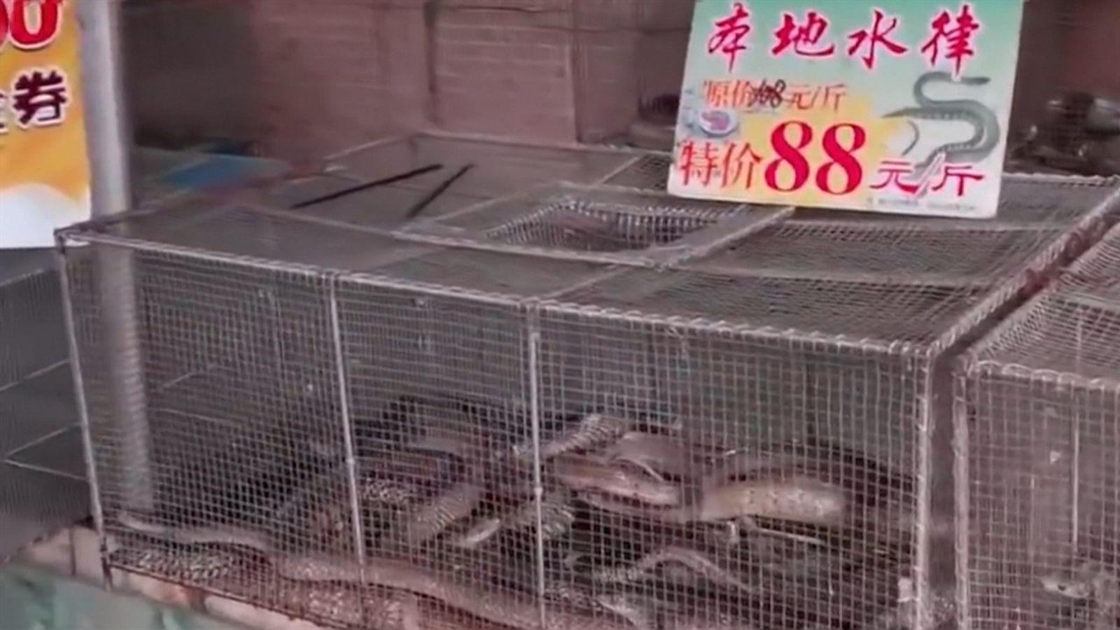 El Mercado Mayorista de Mariscos de Wuhan | Coronavirus: El Origen