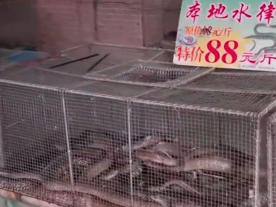El Mercado Mayorista de Mariscos de Wuhan   Coronavirus: El Origen