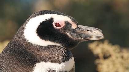 #NGXplorers: Conservación de los pingüinos
