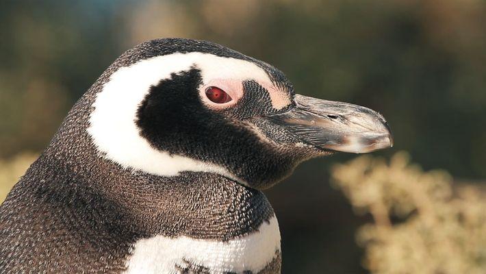 Día de la Conciencia por los Pingüinos
