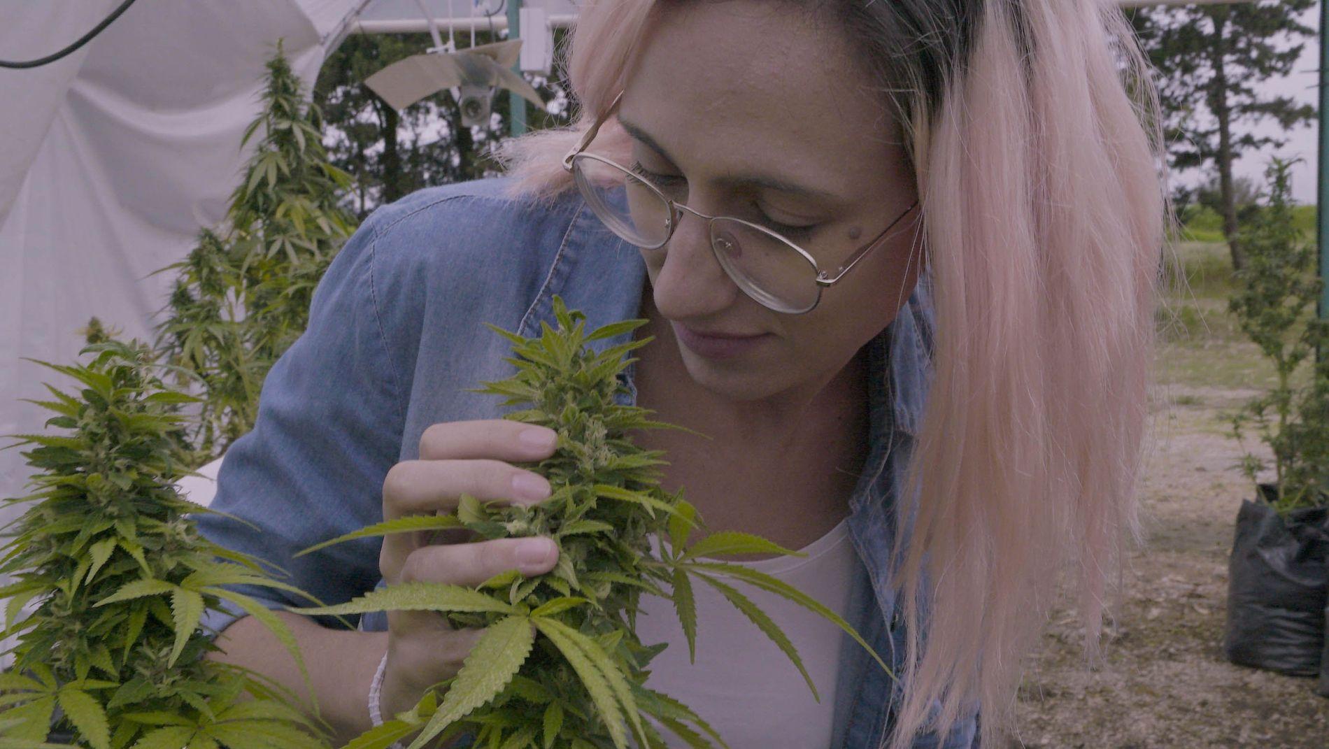Explorer Investigation: Marihuana Medicinal