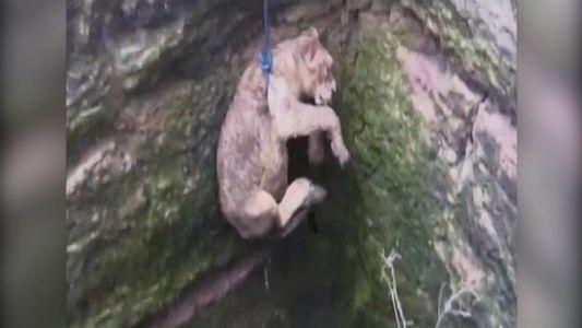 Una cachorra de león es rescatada de un pozo de 24 metros