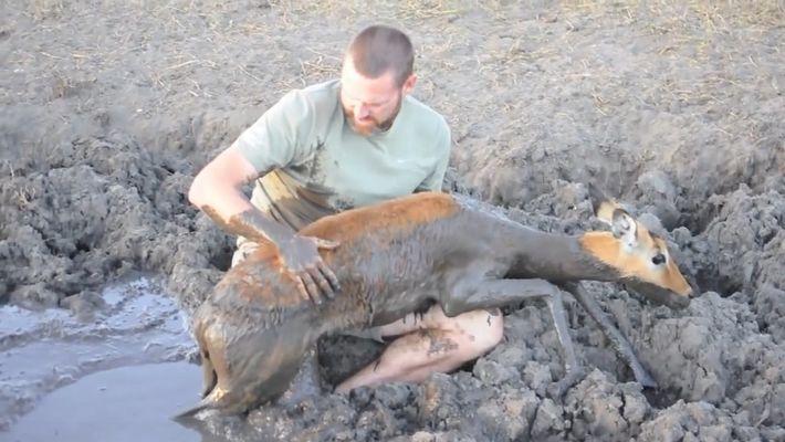 Un hombre salva a un impala