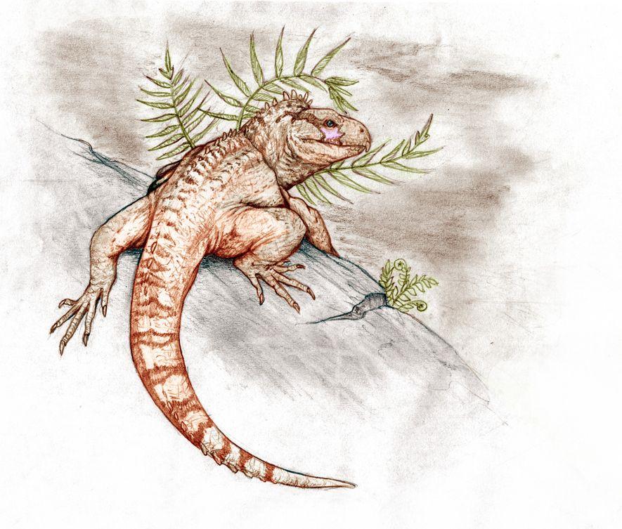 Restos fósiles de una nueva especie de tuátara ayudan a comprender cómo esta familia de reptiles ...