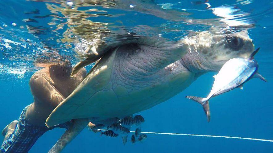 Un pescador apoya con la captura de tortugas marinas y aprende técnicas de muestreo para su ...