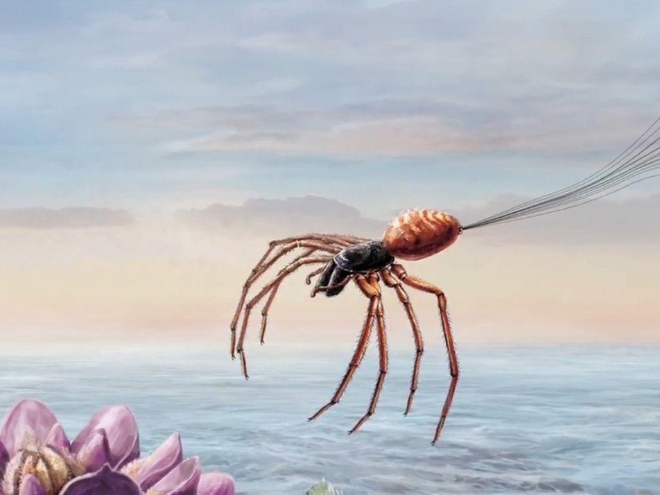 Cómo las arañas usan la electricidad para volar