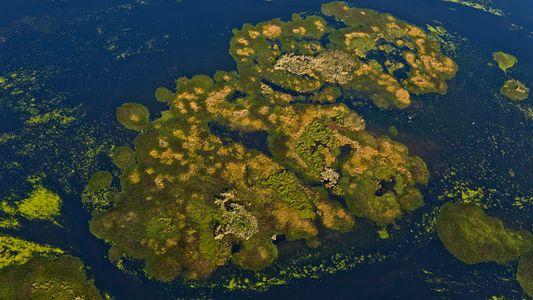 Argentina: se aprobó la creación del Parque Nacional Iberá