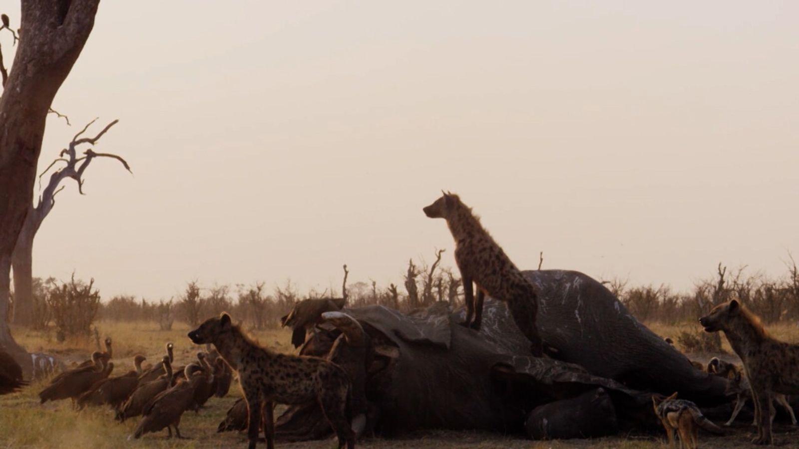 El Funeral de los Elefantes | Imperio Salvaje