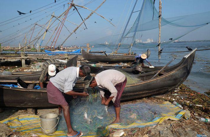 Pescadores en Kochi (ciudad también conocida como Cochín), Kerala, ordenan sus presas.