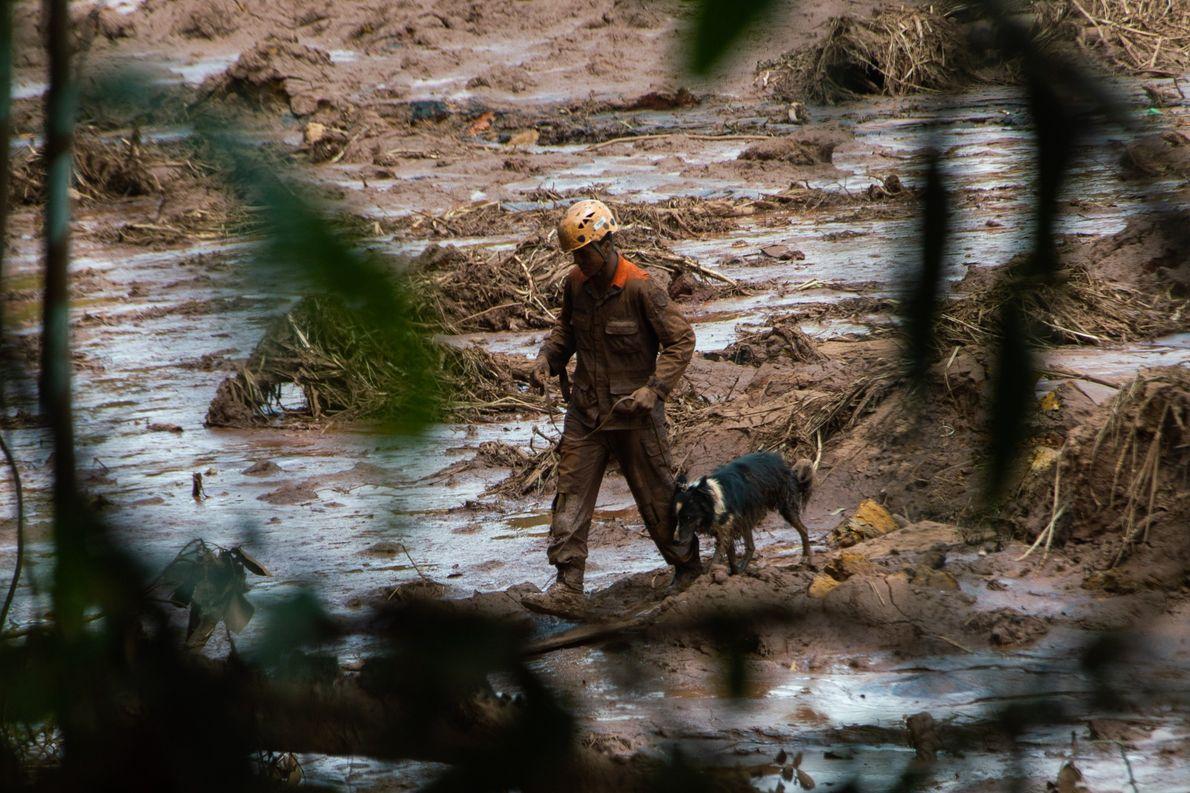 Los perros ayudan en la búsqueda de cuerpos después de la ruptura de la represa en …