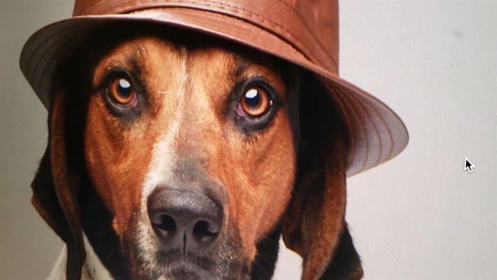Buscadores de Mascotas: Detrás de Escena