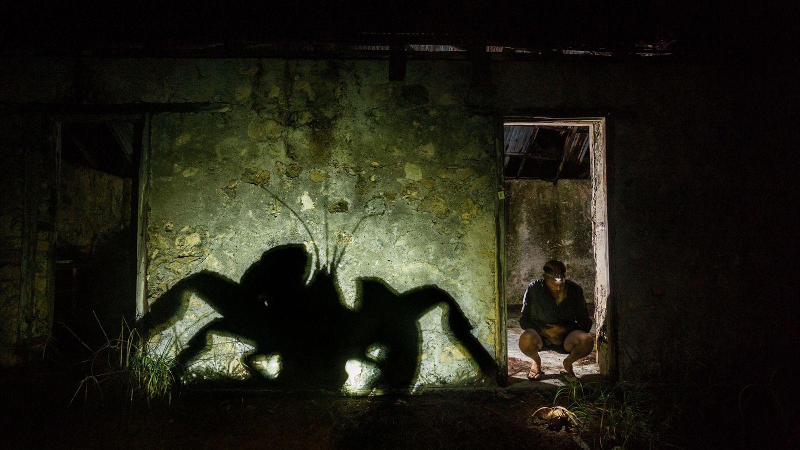 Aldabra tiene una de las últimas poblaciones sanas de cangrejos de los cocoteros en el Índico ...