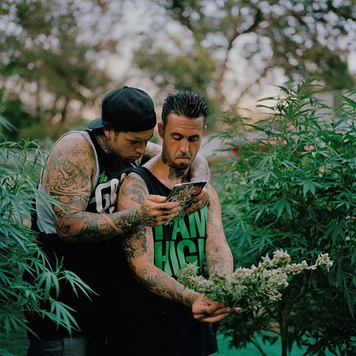 En el norte de California, Nicholas y Richard Lopez sacan fotografías de su cosecha para compartirla ...