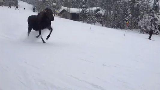 Alce sorprende a snowboarders tras perseguirlos en la montaña