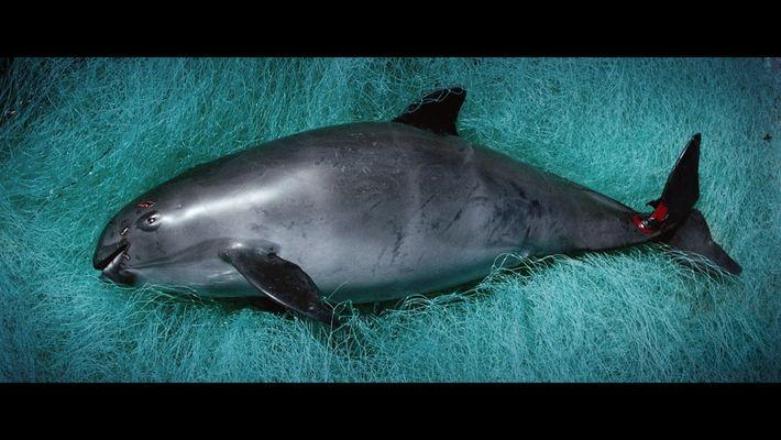 Mar de Sombras: Tráiler Oficial