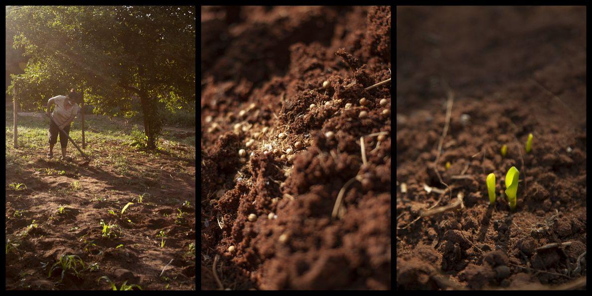 Doña Angela Gómez trabaja la tierra a primeras horas de la mañana y por la tarde, ...