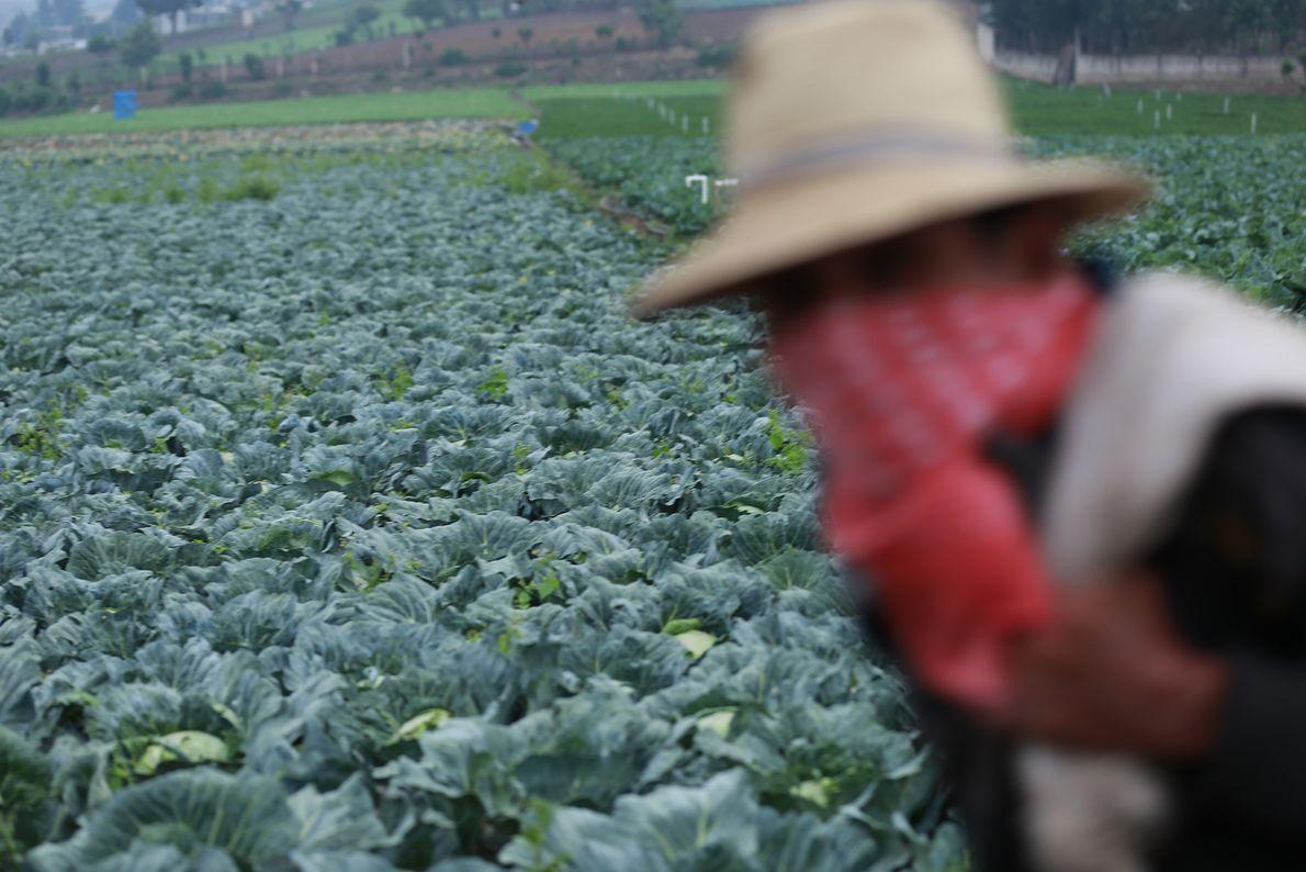 Un trabajador agrícola llega a su parcela para otro día más de trabajodurante el brote de ...
