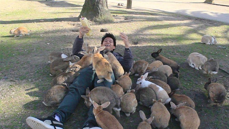 """Descubre por qué se conoce a este lugar de Japón como """"la isla de los conejos"""""""