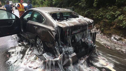 Mixinos morados derramados en la ruta después de un extraño accidente de tráfico