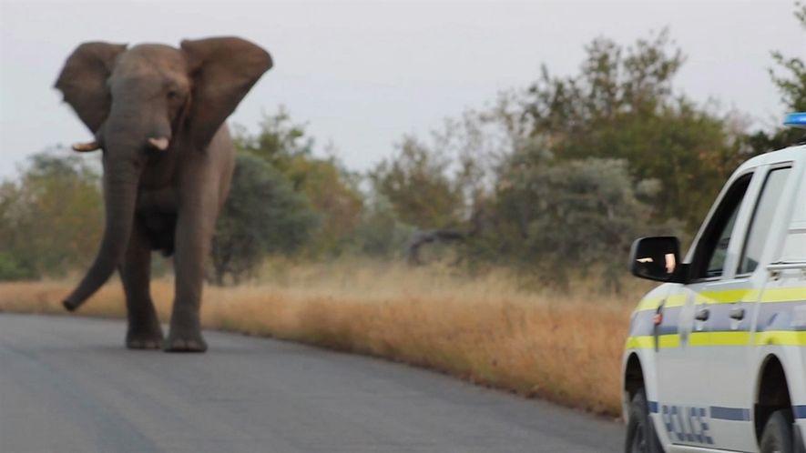 El ataque de este elefante puede que en realidad sea un juego